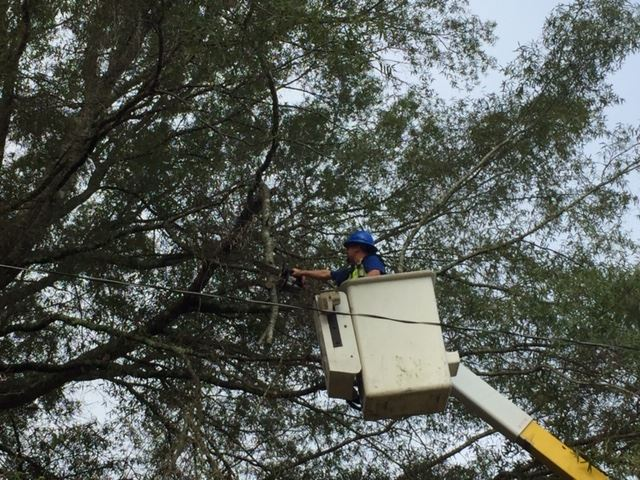 Removing Hazardous Limbs from Trees in the R-O-W